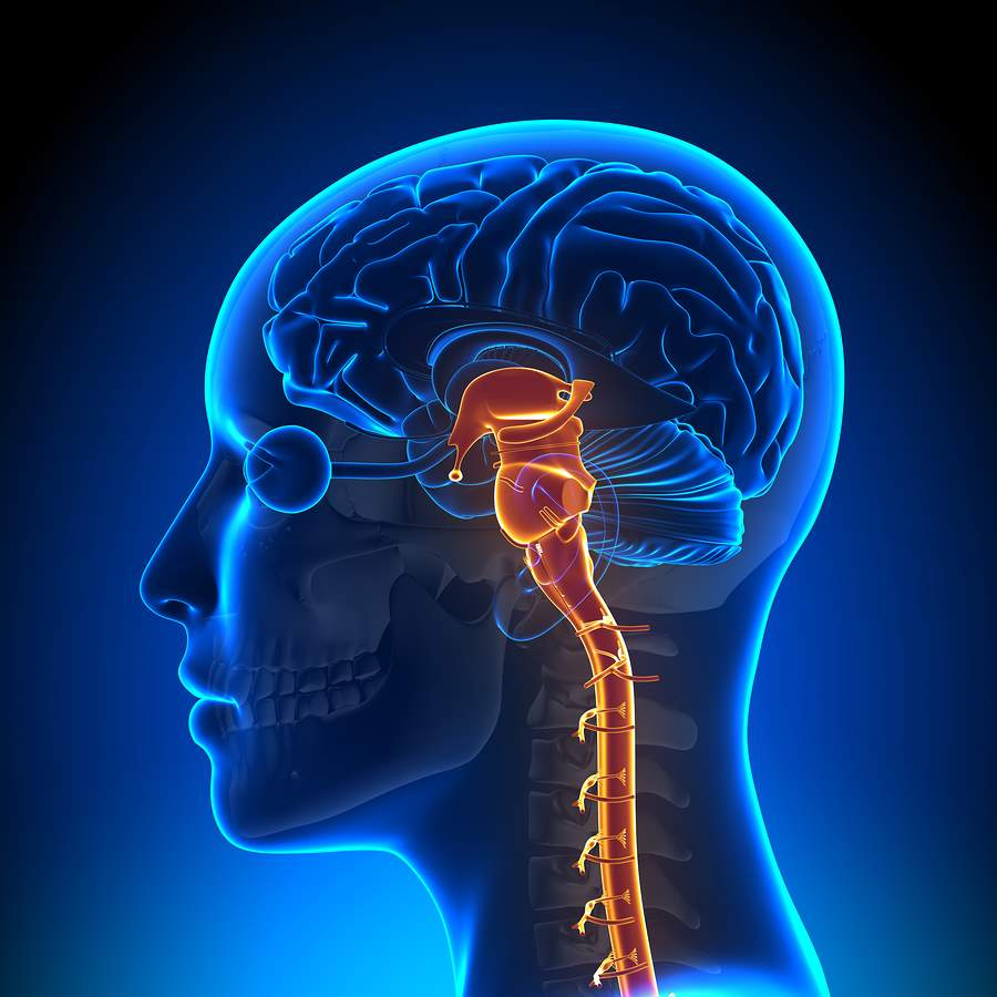 What Are the Causes and Effects of Brain-Stem Injuries?