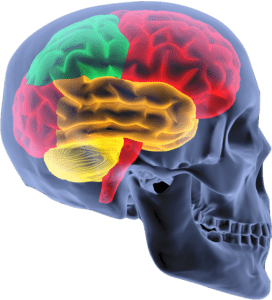 Tampa Brain Injury Attorney