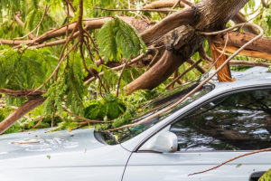 Tree on Car - Hurricane Damage Home Insurance Lawyers - Dolman Law Group